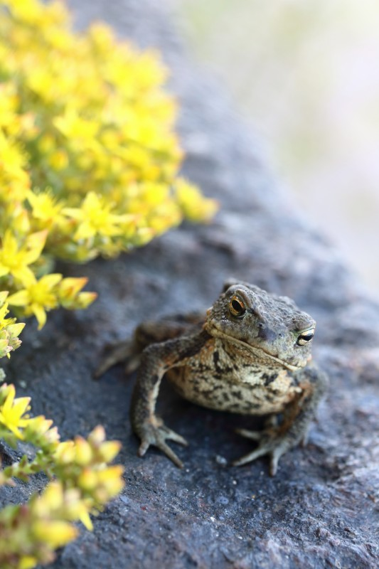 Photo of a toad.